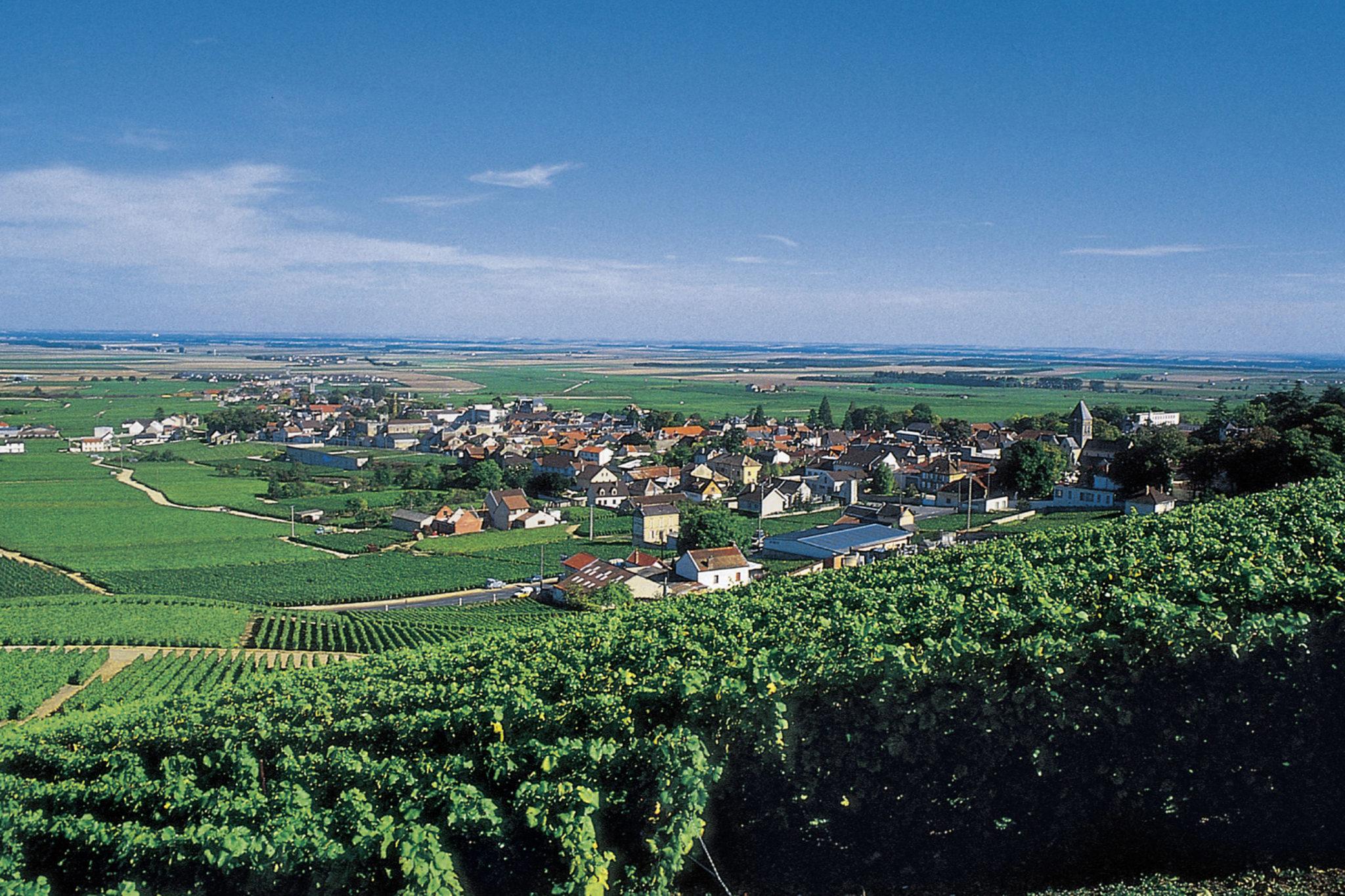 Avize, l'une des communes du triangle d'or de la Côte des Blancs (Mich.el Jolyot.)