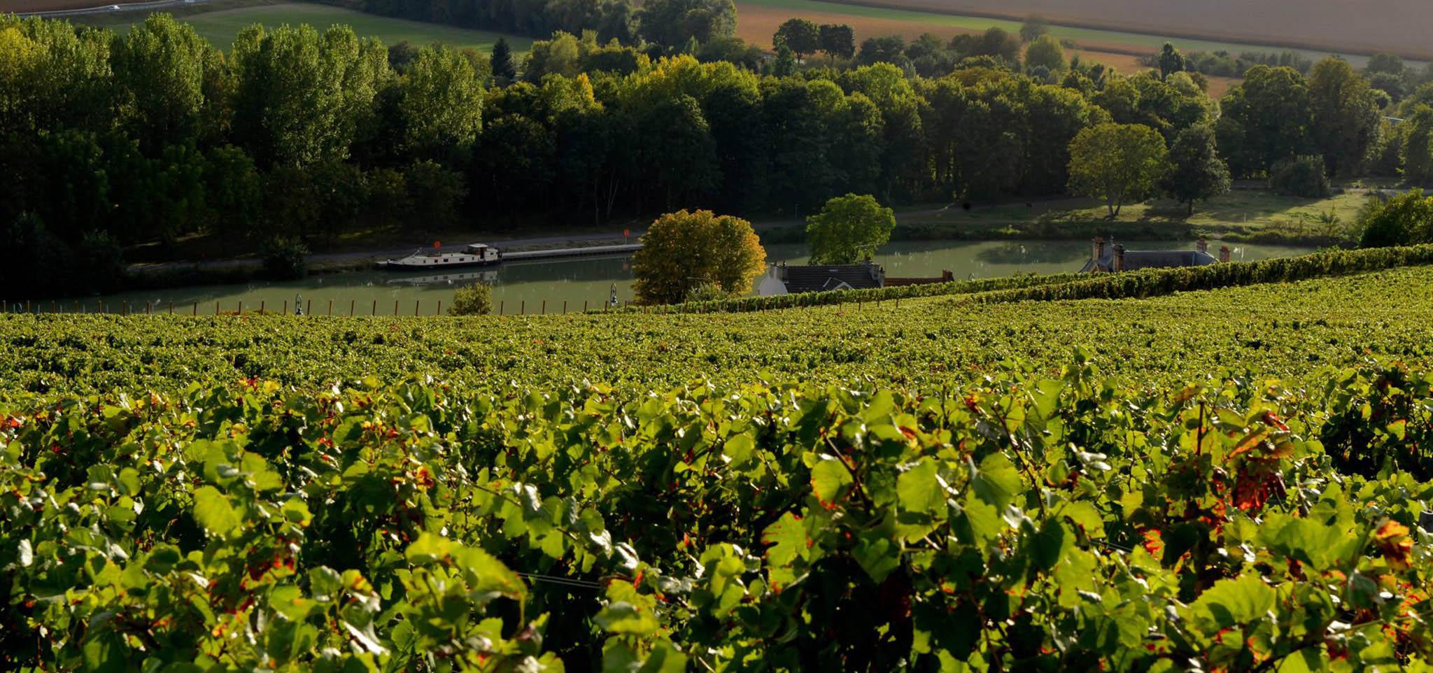 Zéro désherbants d'ici 2025, l'objectif des co-présidents de la Champagne