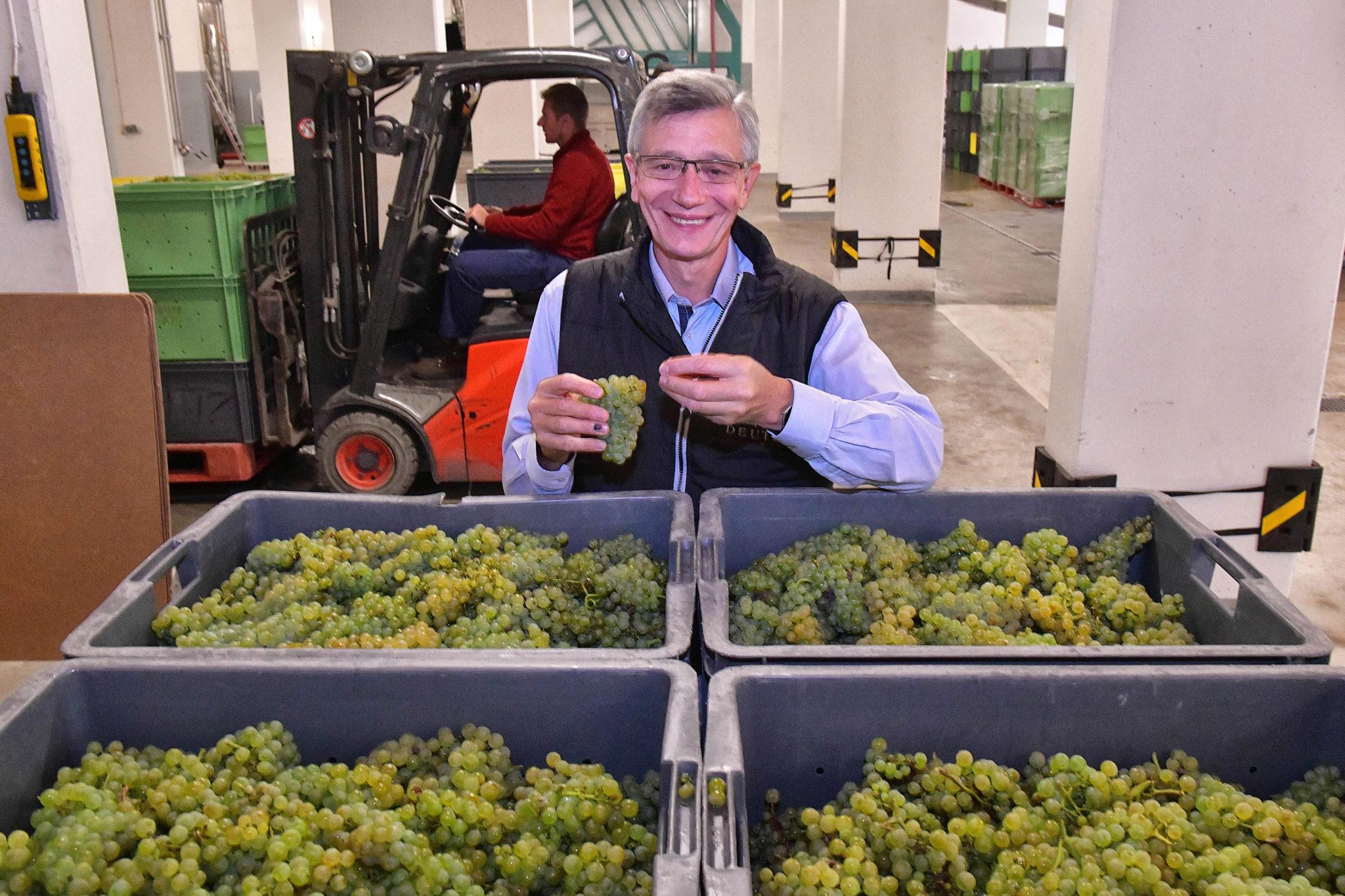 Voici un chef de caves heureux : Michel Davesne, très satisfait des chardonnays chez Deutz.