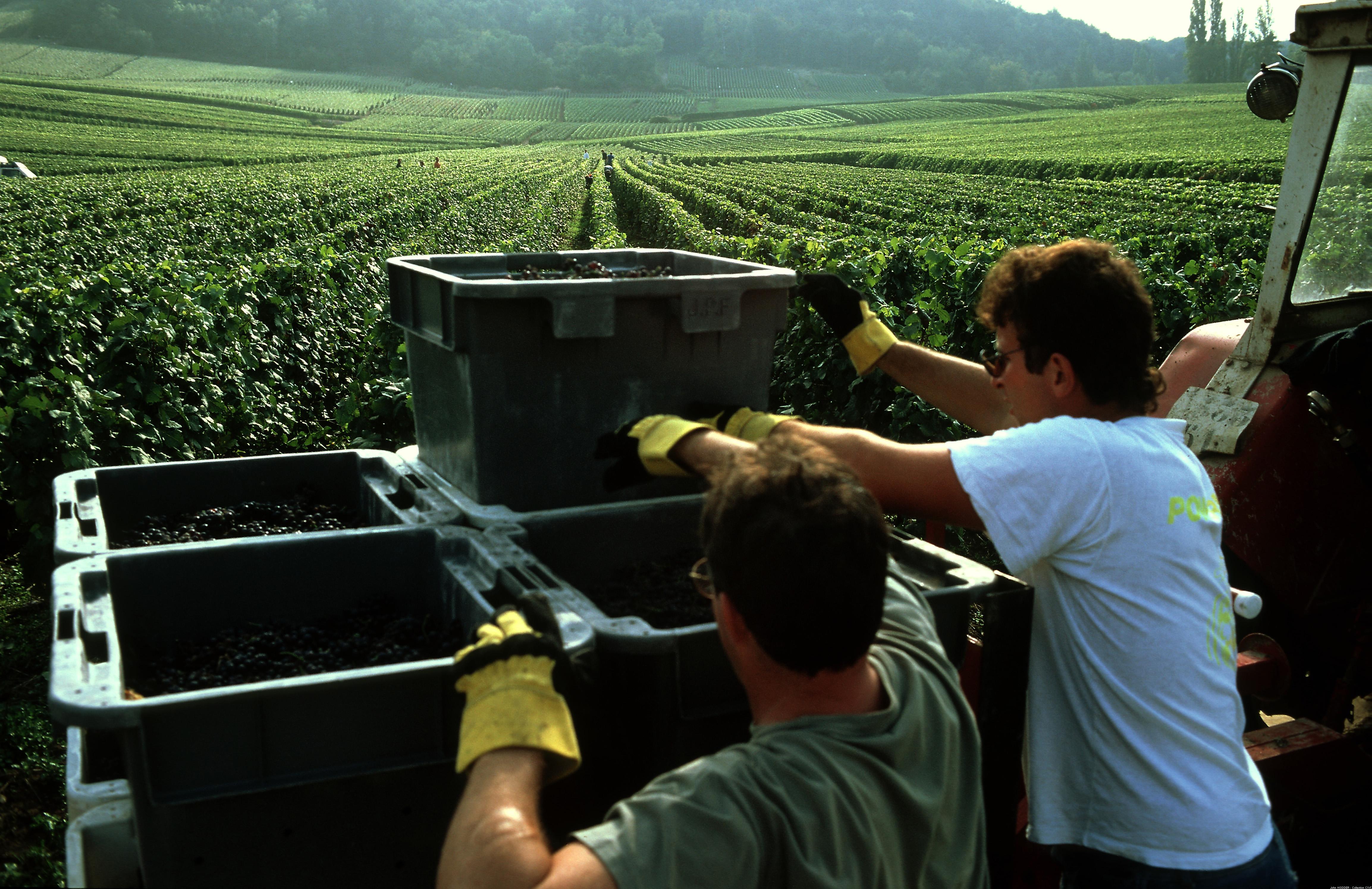 Les résultats de la vendange 2017 en Champagne