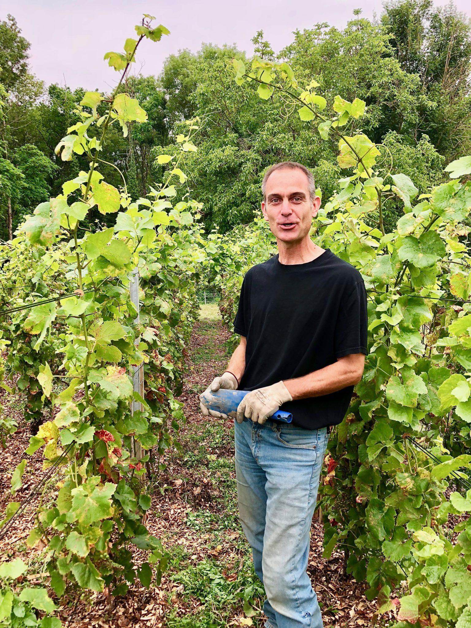 Jérôme Courgey à fond dans l'agroforesterie en viticulture.